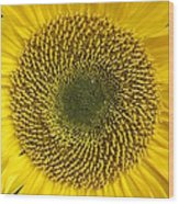 Here Comes The Sun.... Wood Print
