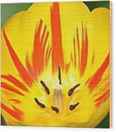 Here Comes The Sun Tulip Wood Print