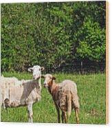 Here Is Looking At Ewe Wood Print