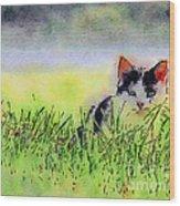 Here Kitty Kitty Kitty Wood Print