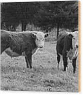 Hereford Portrait V In Black And White Wood Print by Suzanne Gaff