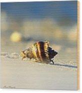 Hermit Crab  Wood Print by Debra Forand