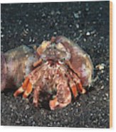 Hermit Crab With Anemone Wood Print