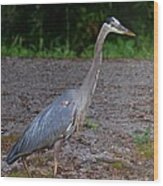 Heron 14-1 Wood Print