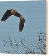 Heron 244a Wood Print