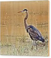Heron At Sunset Wood Print by Marty Koch