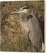 Heron Basking In The Morning Sun Wood Print