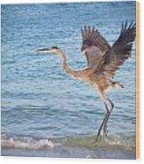 Heron Boca Grande Florida Wood Print by Fizzy Image