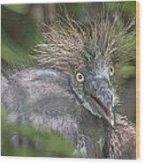 Heron Chick Wood Print