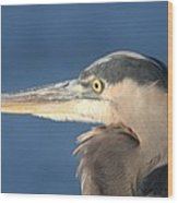 Heron Close-up Wood Print