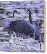 Heron Encounter - Battle - Fight Wood Print
