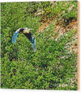Heron Flies Over Oak Creek In Red Rock State Park Sedona Arizona Wood Print