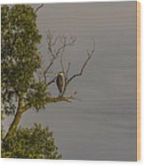 Heron Greets The Day Wood Print