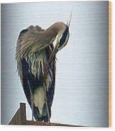 Heron Grooming Wood Print