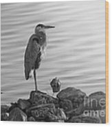 Heron In Black And White Wood Print