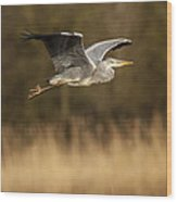 Heron In Flight Wood Print by Simon West