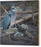 Heron King Wood Print