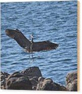 Heron Landing Wood Print