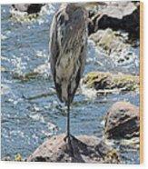 Heron On One Leg Wood Print