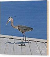 Heron On Rooftop Wood Print