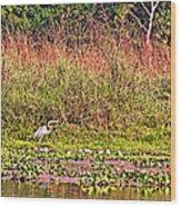 Heron On Shore Of Rapti River In Chitwan Np-nepal  Wood Print
