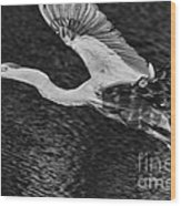 Heron On The Move Up Close Wood Print