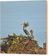 Heron Perch Wood Print