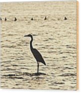 Heron Standing In Water Wood Print