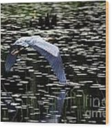 Heron Take Off Wood Print