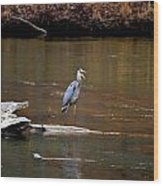 Heron Talking Wood Print