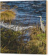 Heron Watchful Eye Wood Print