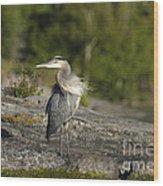 Heron With Corkscrew Neck Wood Print