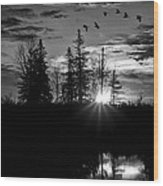Herons In Flight - Black And White Wood Print