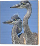 Herons On The Lookout Wood Print
