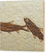 Herring Fish Fossil Wood Print