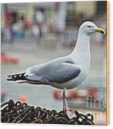 Herring Gull At The Harbour Wood Print