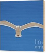 Herring Gull In Flight Wood Print
