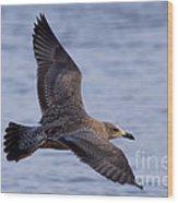 Herring Gull In Flight Photo Wood Print