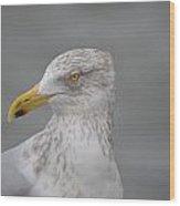 Herring Gull Wood Print