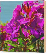 Hervey Bay Flowers Wood Print