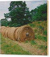 Hey- Hay Roll Wood Print