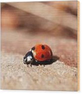 Hey There Little Lady Bug Wood Print
