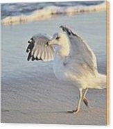 Hey Wait - Sea Gull Wood Print