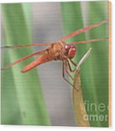 Hi Dragon Fly Wood Print