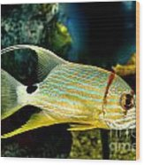 Hi Fin Snapper Wood Print