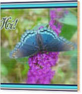 Hi Hello Greeting Card - Red Spotted Purple Butterfly Wood Print