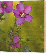 Hibiscus 01 Wood Print