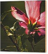 Hibiscus 03 Wood Print