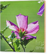 Hibiscus 04 Wood Print