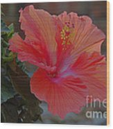 Hibiscus 1 Wood Print